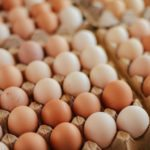 Senior Care in Huntington NY: National Egg Month